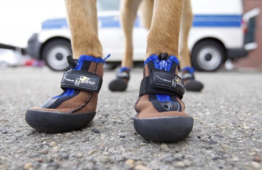 Calzado protector para los perros policía en Alemania