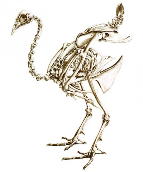 Foto: \'Skeleton of a peacock\' | Arte y ornitología