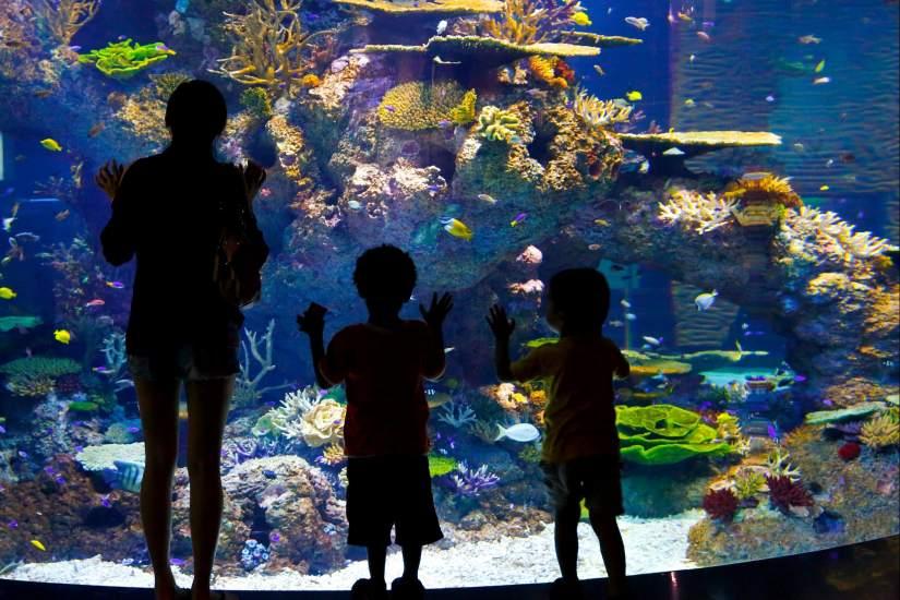 Un acuario gigantesco