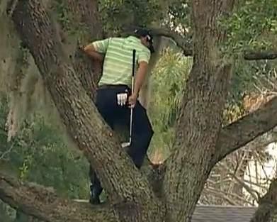 Sergio garcía se sube a un árbol para golpear la bola