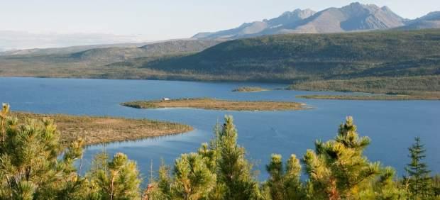 Taiga, bosque boreal