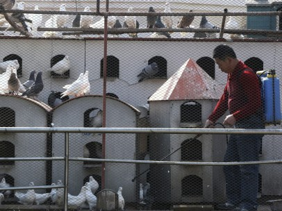La gripe aviar se cobra su octava víctima en China