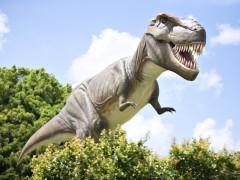 Una docena de aves dan claves de la locomoción de dinosuarios como los Tirannosaurus rex