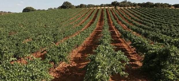 Bodegas Real, ejemplo del buen vino de Valdepeñas