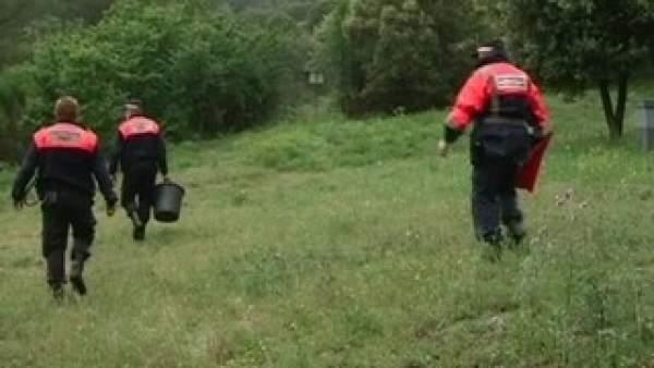 Búsqueda de un toro fugado en Tiana
