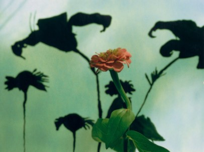 Untitled #8 (Flower), 2002�5
