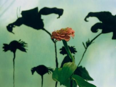 Untitled #8 (Flower), 2002–5