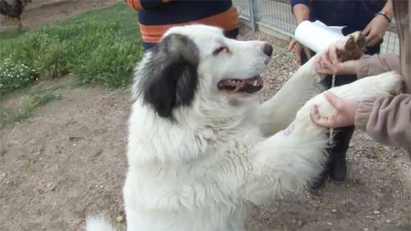 Un perro con sus dueños