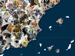 Día del Perro sin Raza: mapa de adopciones