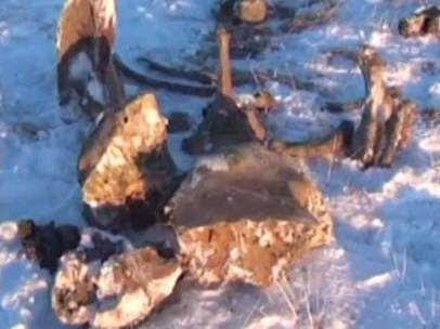 Hallan restos de sangre de mamut
