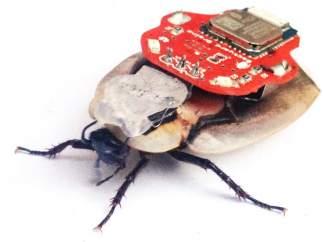 Cucarachas teledirigidas