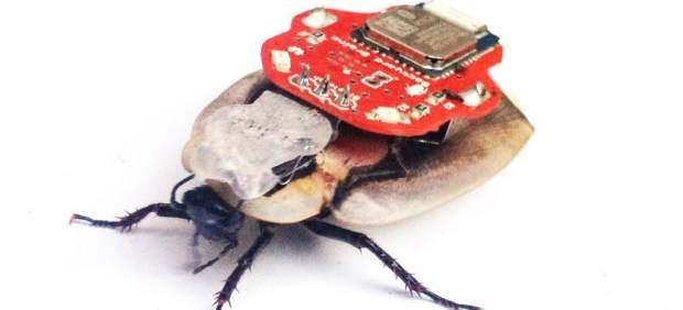 Polémica por un sistema que permite teledirigir cucarachas vivas desde un 'smartphone'