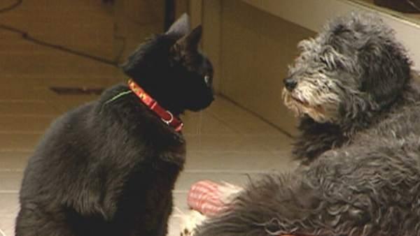 Un gato y un perro