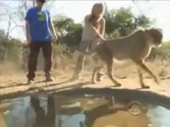Adam Sandler atacado por un guepardo