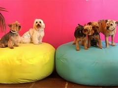 Viajes y mascotas: alojamientos 'pet-friendly' en España