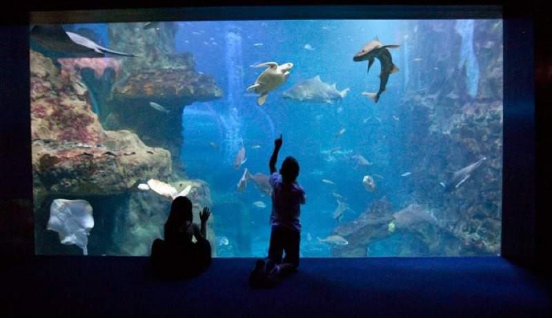 Aquarium un paseo por la san sebasti n submarina - Aquarium donosti precio ...