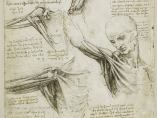 'The muscles of the shoulder', c.1510-11