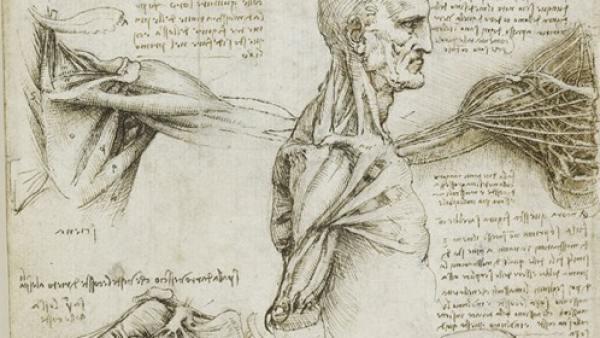 El estudio de anatomía humana de Leonardo no tiene nada que envidiar ...