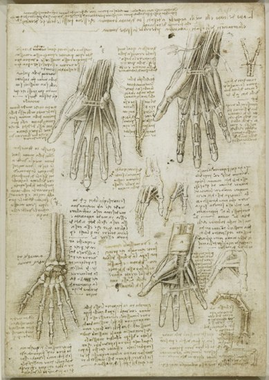 Foto: \'The bones, muscles and tendons of the hand\', c.1510-11 ...
