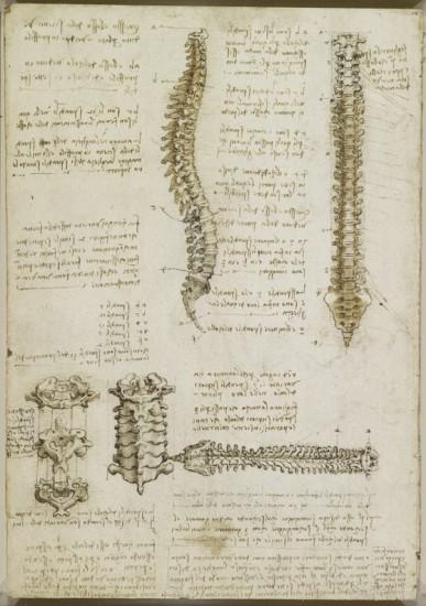 Foto: \'The vertebral column\', c.1510-11 | Leonardo, genio de la anatomía
