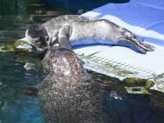 El Oceanogràphic colabora en la conservación de la fauna marina.