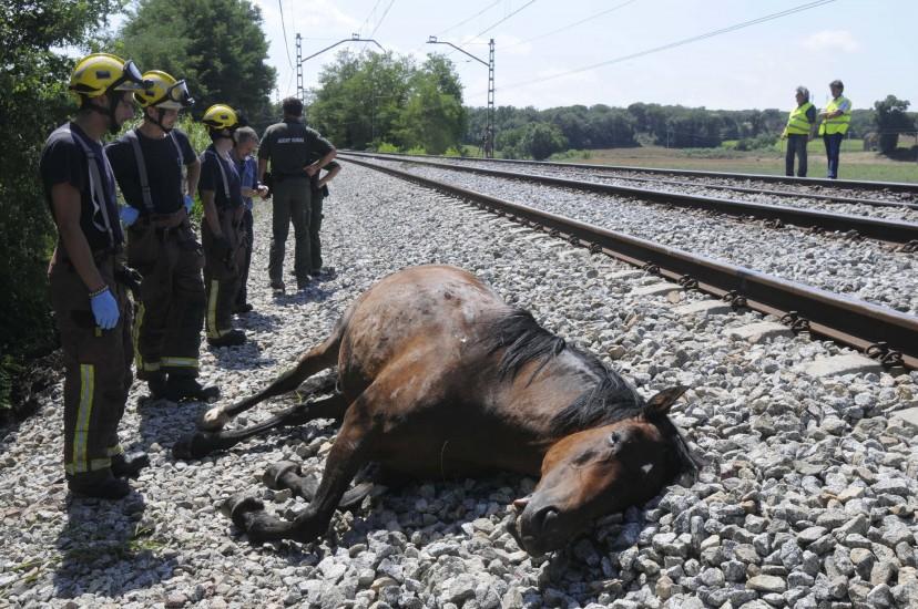 Un tren atropella a una docena de caballos en Girona