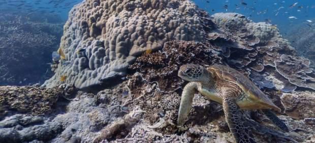 Google Street View añade los océanos a sus mapas