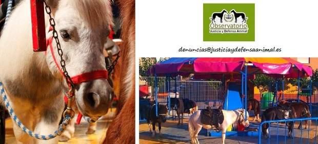Carrusel de ponis