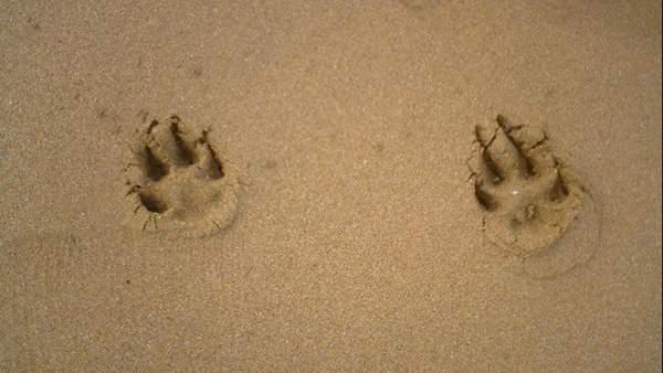 Huellas playa perros