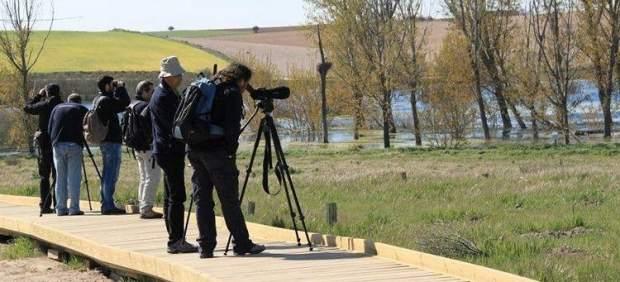 Observación de aves en las Tablas de Daimiel