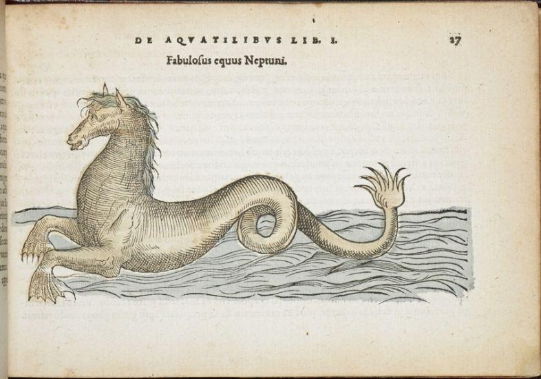 The sea horse in Pierre Belon's De aquatilibus libri duo (Paris: Apud Carolum Stephanum, 1553), p. 27