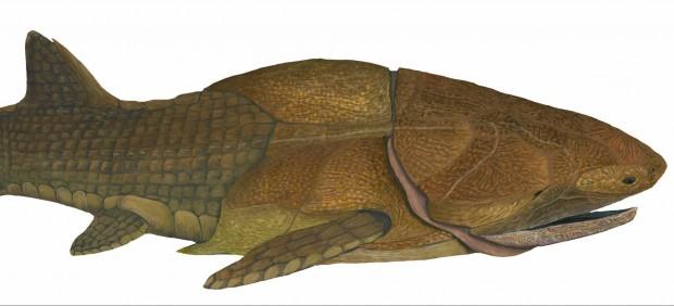 El fósil más antiguo de un pez con mandíbula