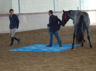 Aprendiendo de los caballos
