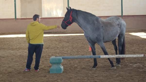 En estado crítico un mozo de cuadras al recibir una coz de un caballo en Somosaguas