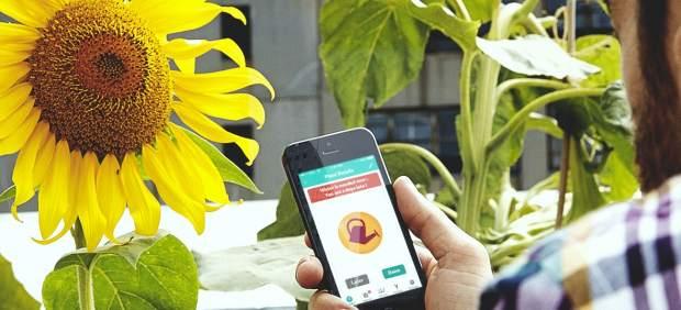 'Flower Power' conecta el móvil a las plantas para mantenerlas vivas