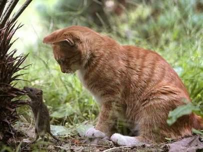Ratones y gatos