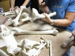 Restos óseos