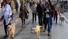 Los perros gu�a reivindican su importancia