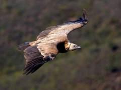 M.Alrededor de 82.000 aves de 30 especies cruzan el Estrecho desde África en los últimos cuatro meses