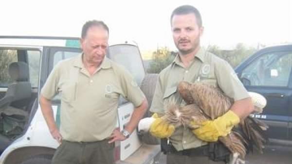 Rescatan a dos buitres leonados atrapados en una carretera de Almería