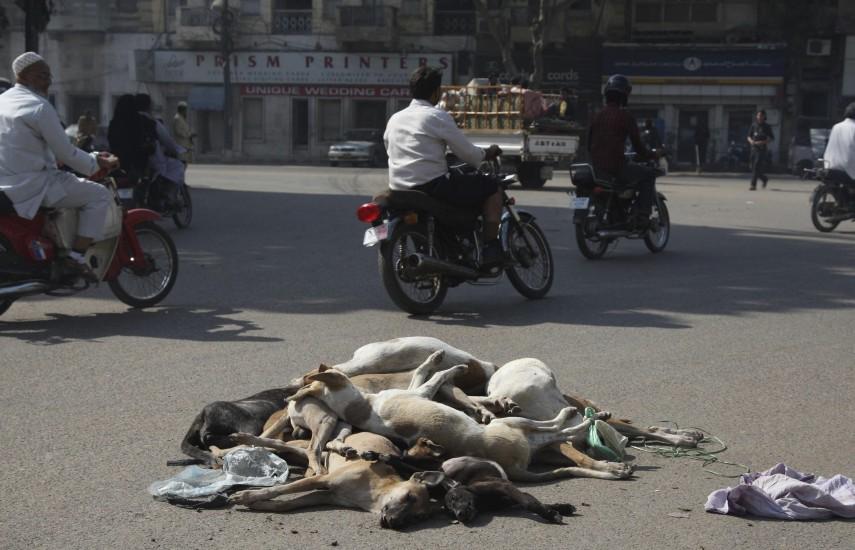 Limpia canina en Pakistán