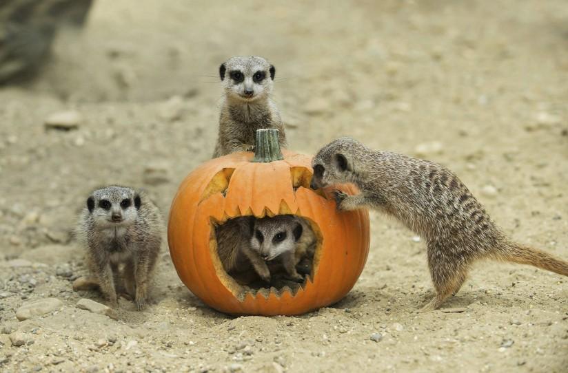 Los animales también celebran Halloween