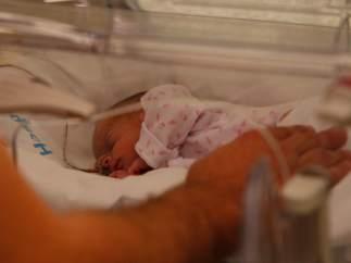 Iris, en la incubadora