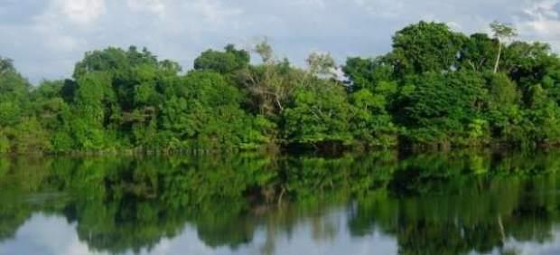 La mitad de los bosques tropicales del mundo tienen difícil mantener su biodiversidad.