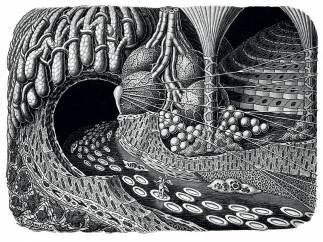 'Einfahrt in eine Drüsenhöhle' ('Entering a gland cave')
