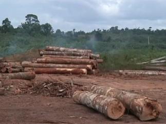 La deforestación del Amazonas aumenta un 467%