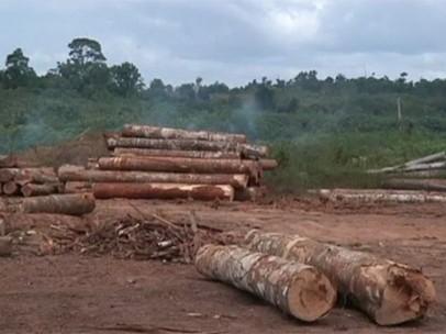 La deforestación del Amazonas aumenta.