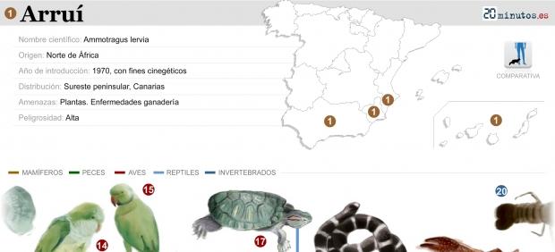 Principales especies invasoras que amenazan España