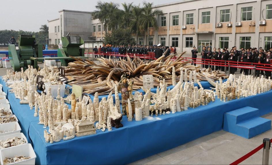 Destruyen 6,2 toneladas de marfil de contrabando en China