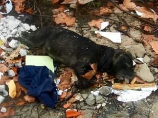 El cadáver del perro fallecido tras una pelea